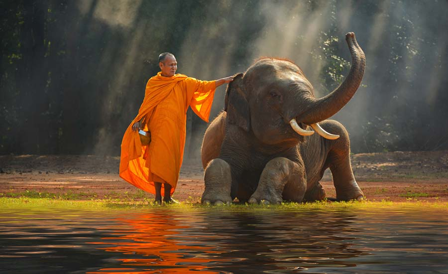 Thailand-human-with-elephant